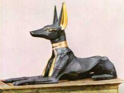 Leggi tutto: Egitto, scoperta tomba egizia con 8 milioni di cani mummificati