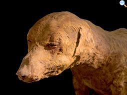 mummia di cane